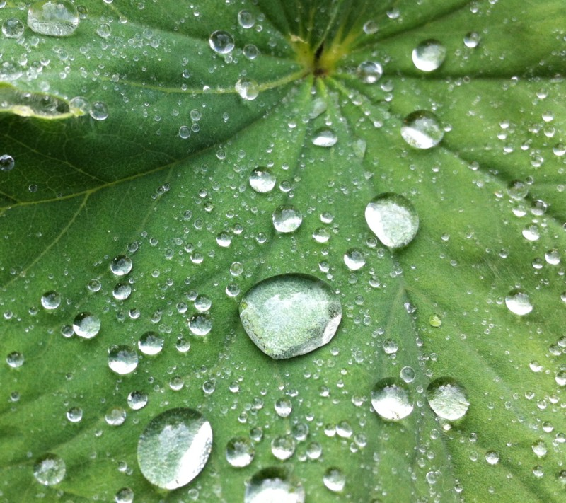 Raindrops on a leaf - taken with an iphone believe it or not!
